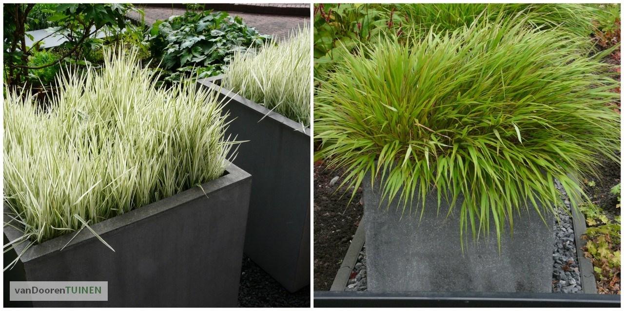 Grassen In Pot.Het Gebruik Van Siergrassen Tuinontwerpervinden Nl Tog
